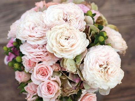 rosas rosas foristeria lislore pamlona